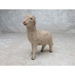 Schaf gerade schauend
