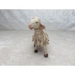 Schaf rechts schauend