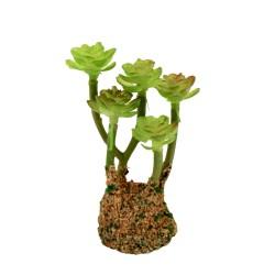 Kaktus 9 cm